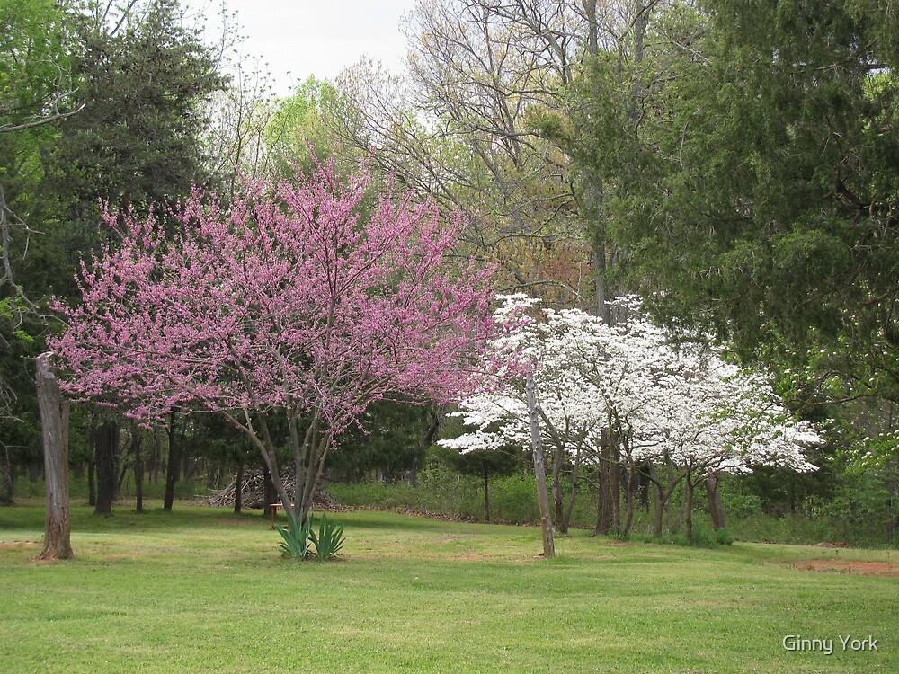 Trees In My Yard by Ginny York
