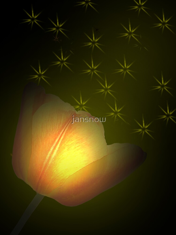 Luminescent Tulip © by jansnow