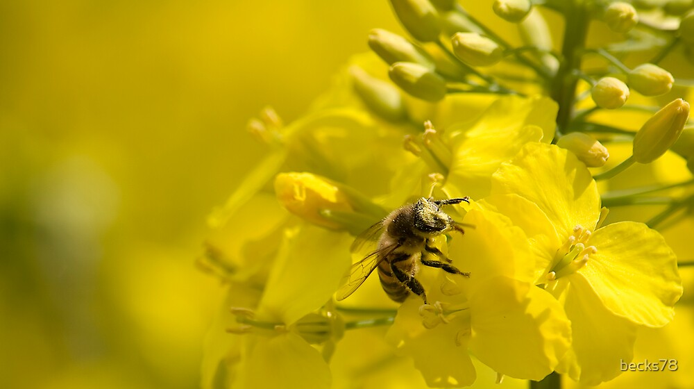 Bee by becks78