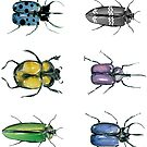 Beetle collection by Anna by annahedeklint
