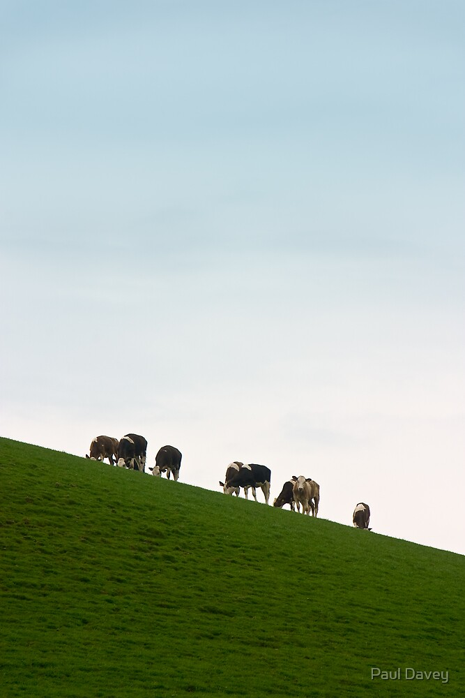 Cows on a Slope by Paul Davey