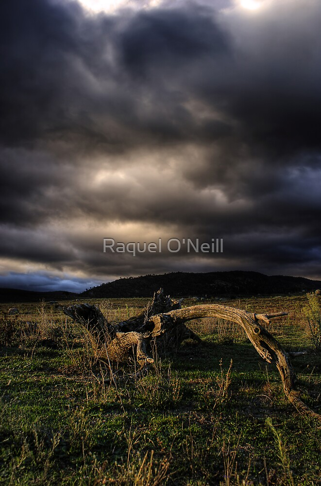 The Rains Are Here! by Raquel O'Neill