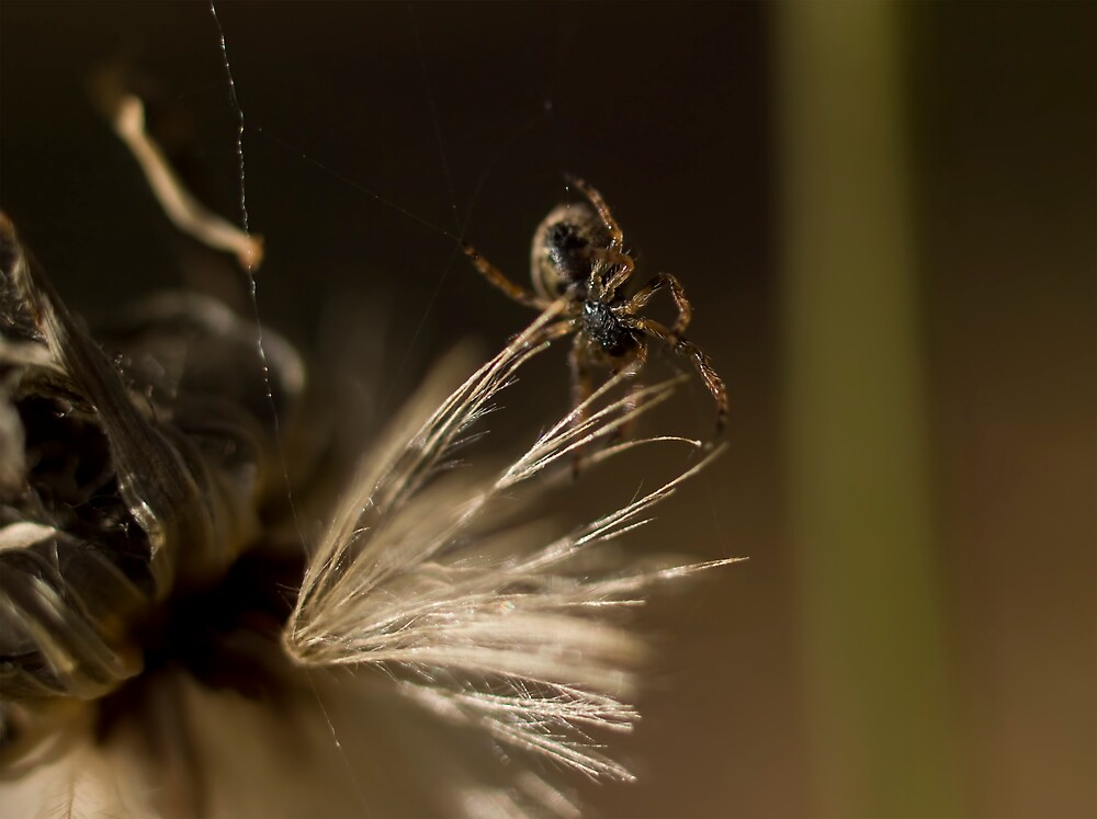 Itsy Bitsy Spider by Jenni77