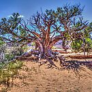 Utah Juniper on the Delicate Arch Trail by Roger Passman