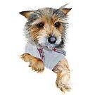 Yorkshire Terrier Dog Watercolor Painting Pet Artwork by Alison Langridge