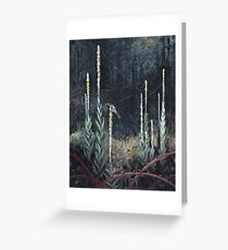 Clearing Greeting Card