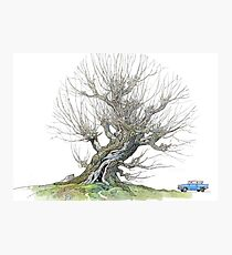 The Whomping Willow Photographic Print