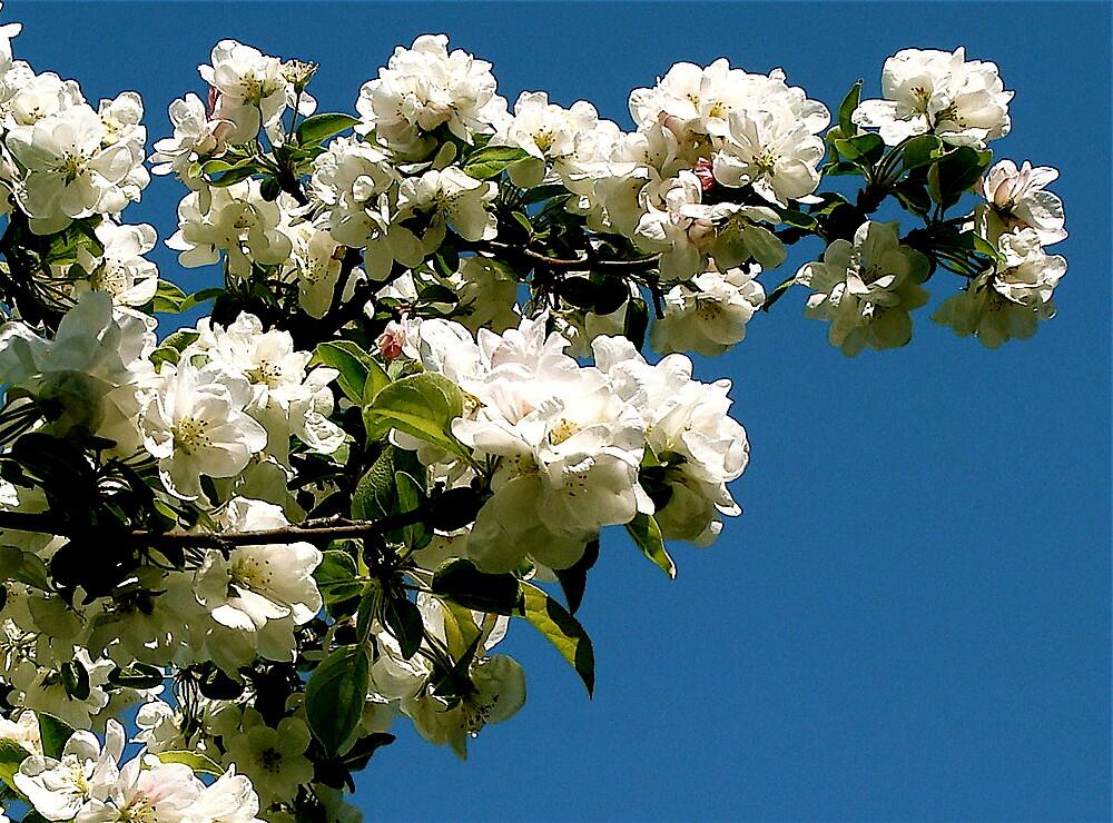 nice spring  by anisja