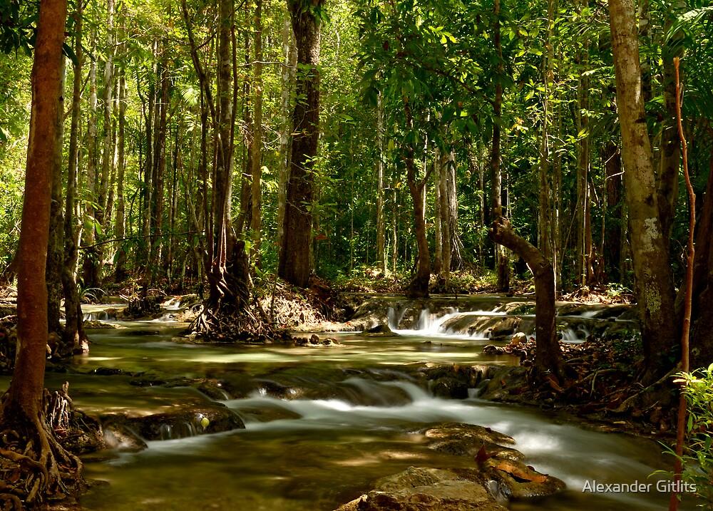 Rain Forest by Alexander Gitlits