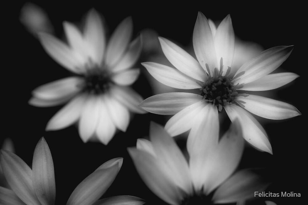 Flor de canelo by Felicitas Molina