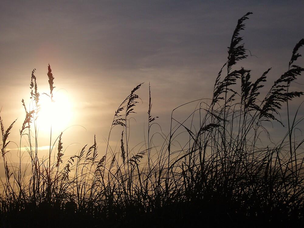 Beach Wheat by Dan Mergner