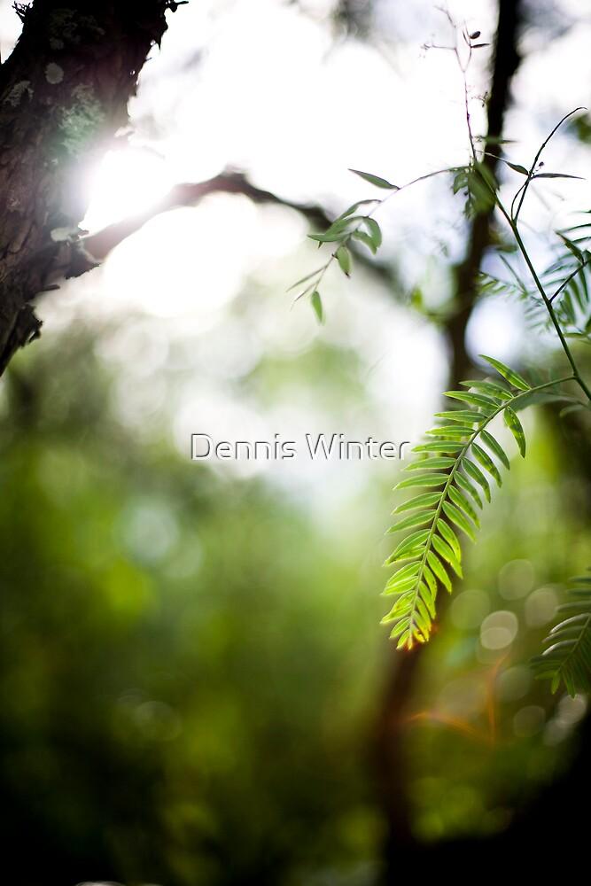 Glare by Dennis Winter
