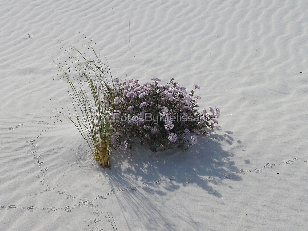 Desert Bouque by FotosByMelissa