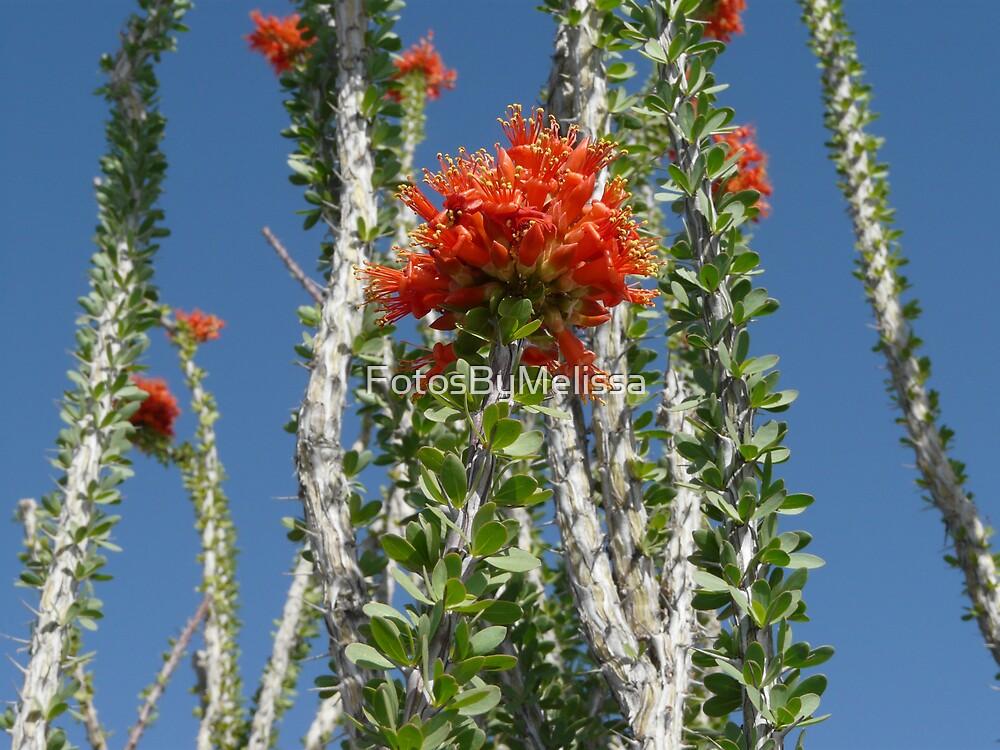 Cactus Flower by FotosByMelissa