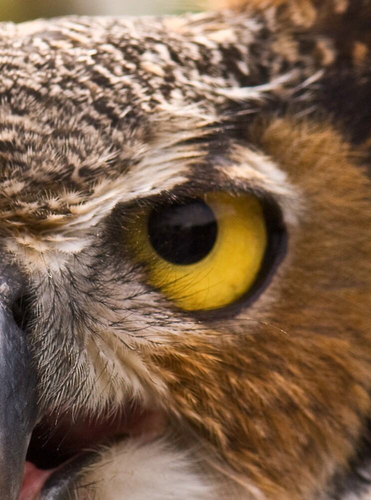 Eye of the Great Horned Owl by FireDzine