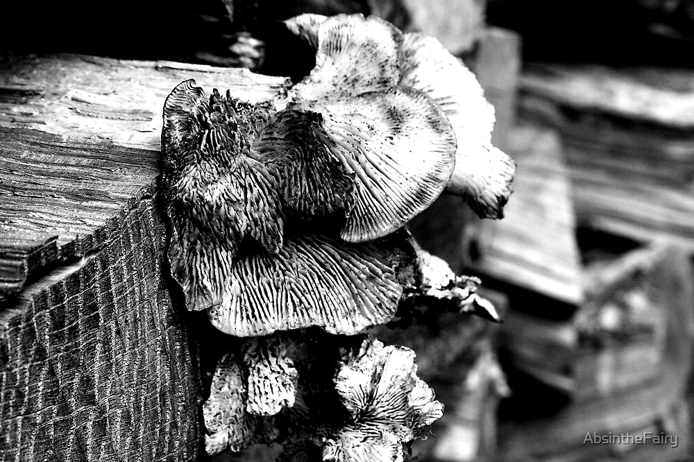 Tree Fungus by AbsintheFairy