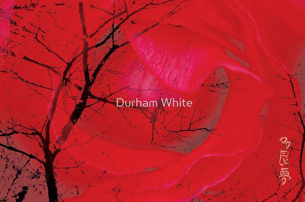 Sensations by Durham White