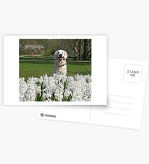 Ditte and white hyacinths and a lovely smile Postkarten