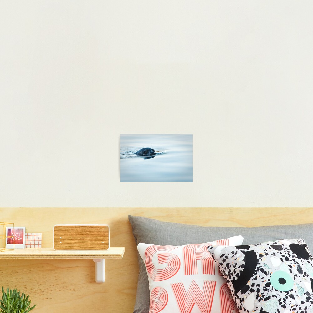 Who is Watching Whom: Seal, Active Pass Photographic Print