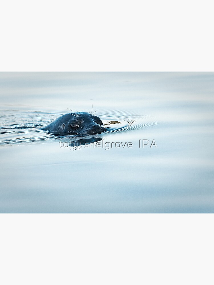 Who is Watching Whom: Seal, Active Pass by tobysnelgrove