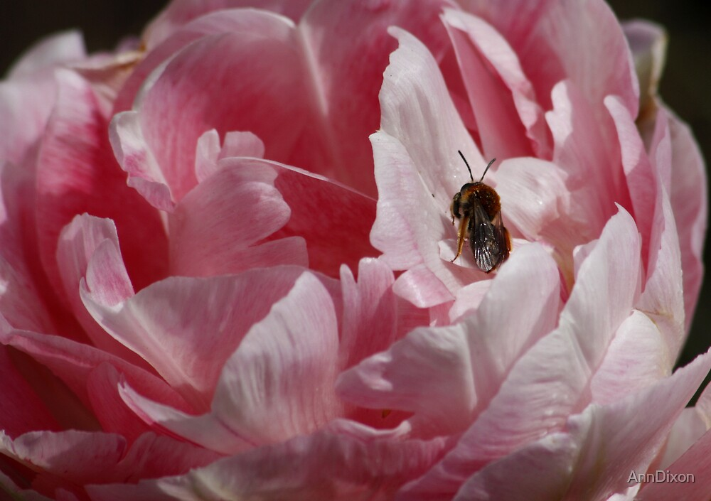Tulip and the Bee by AnnDixon
