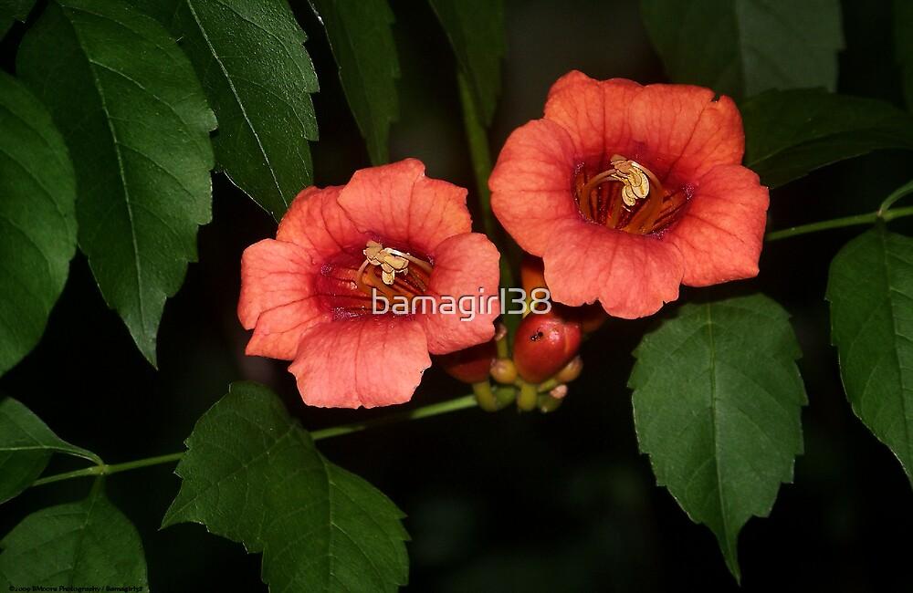 Orange Delight by bamagirl38