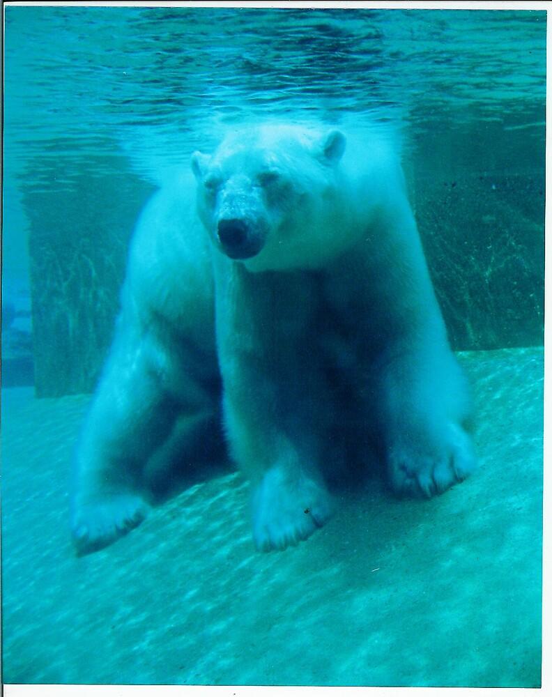 blue bear by mizvicki
