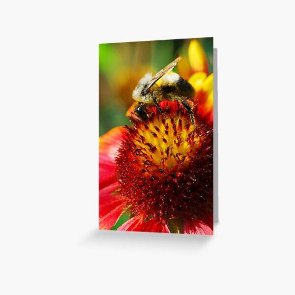Bee on Blanket Flower Greeting Card