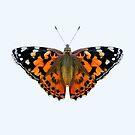 Painted Lady Butterfly Watercolor Painting Wildlife Artwork by Alison Langridge