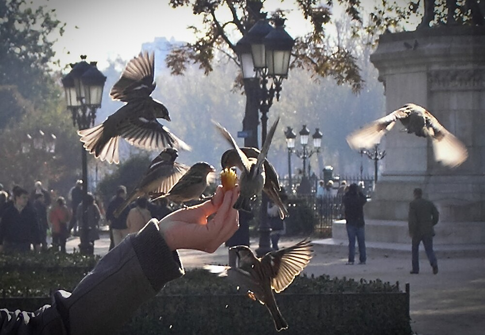 Feed the Birds - Notre Dame by Steve Rhodes