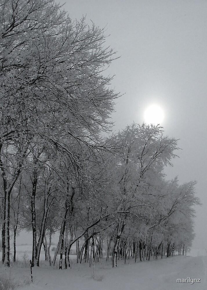 Wintry Tree Line by marilynz