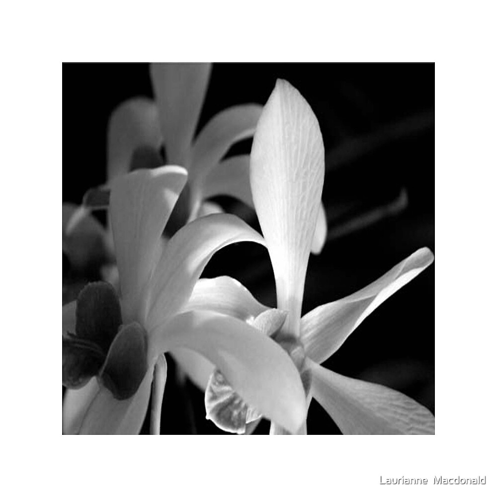 Orchid13_BW by Laurianne  Macdonald