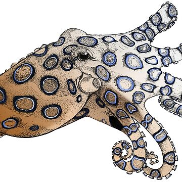 Blue-Ringed Octopus Color by feralbeagle