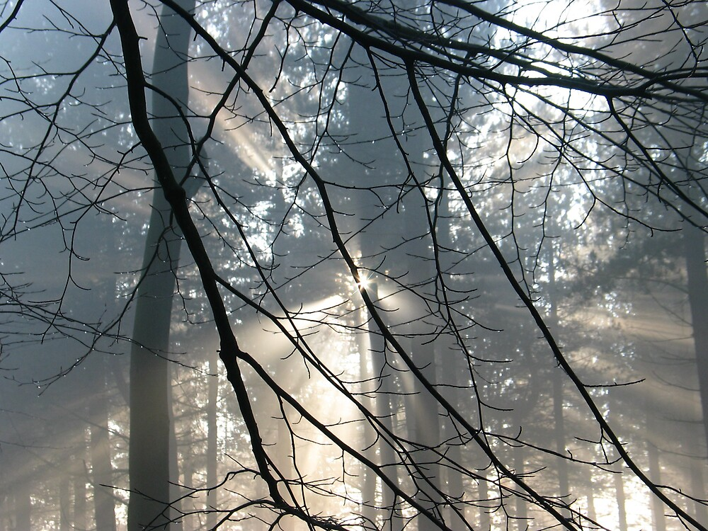 Winter Forest 3 by burlism
