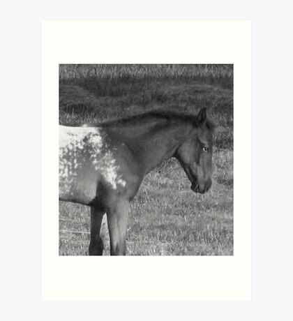 The Horse Next Door Art Print