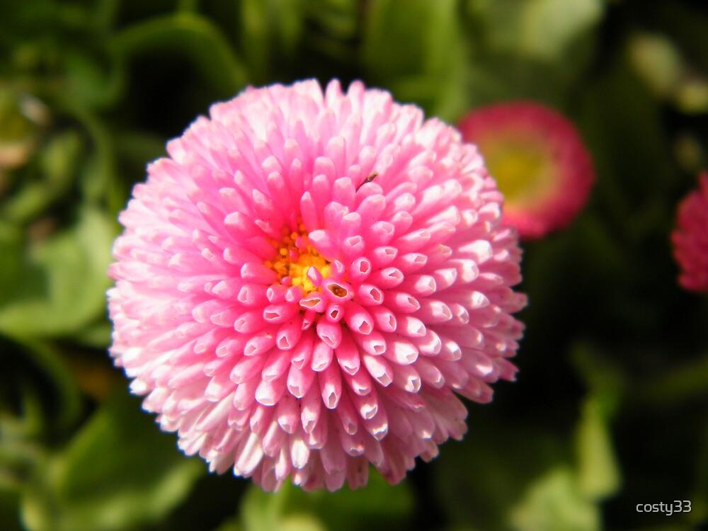 Interesting flower by costy33
