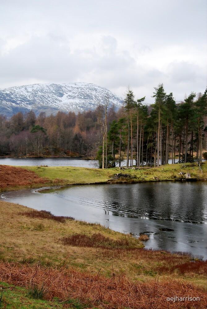 Winter View by aejharrison