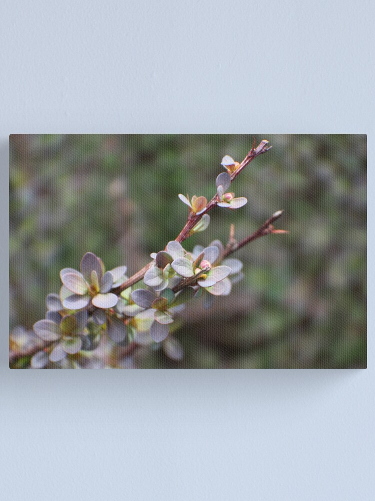 Alternate view of Spring Barberry Canvas Print