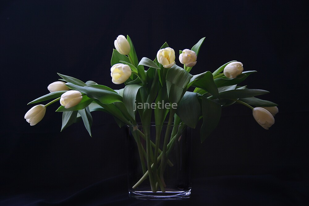 Elegance by janetlee