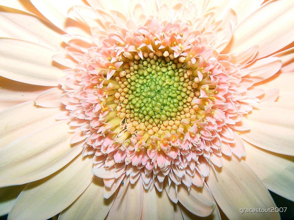 INSIDE OF A FLOWER by gracestout2007