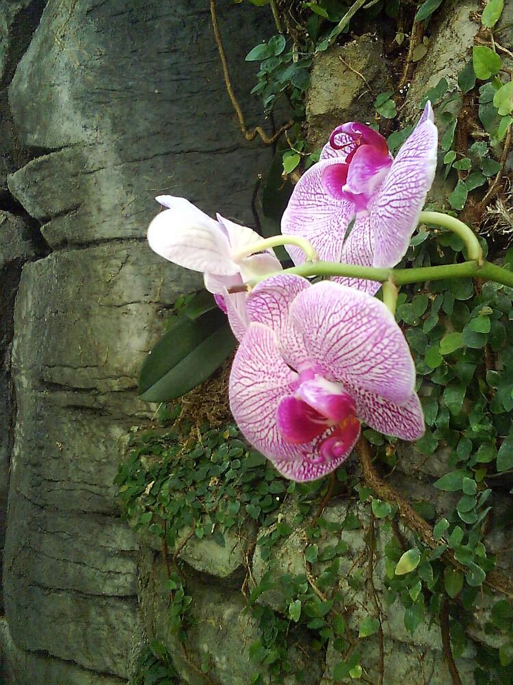 Stone Cold Flower by darklydreaming