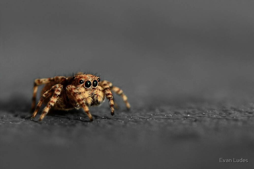 Spring's First Jumper by Evan Ludes