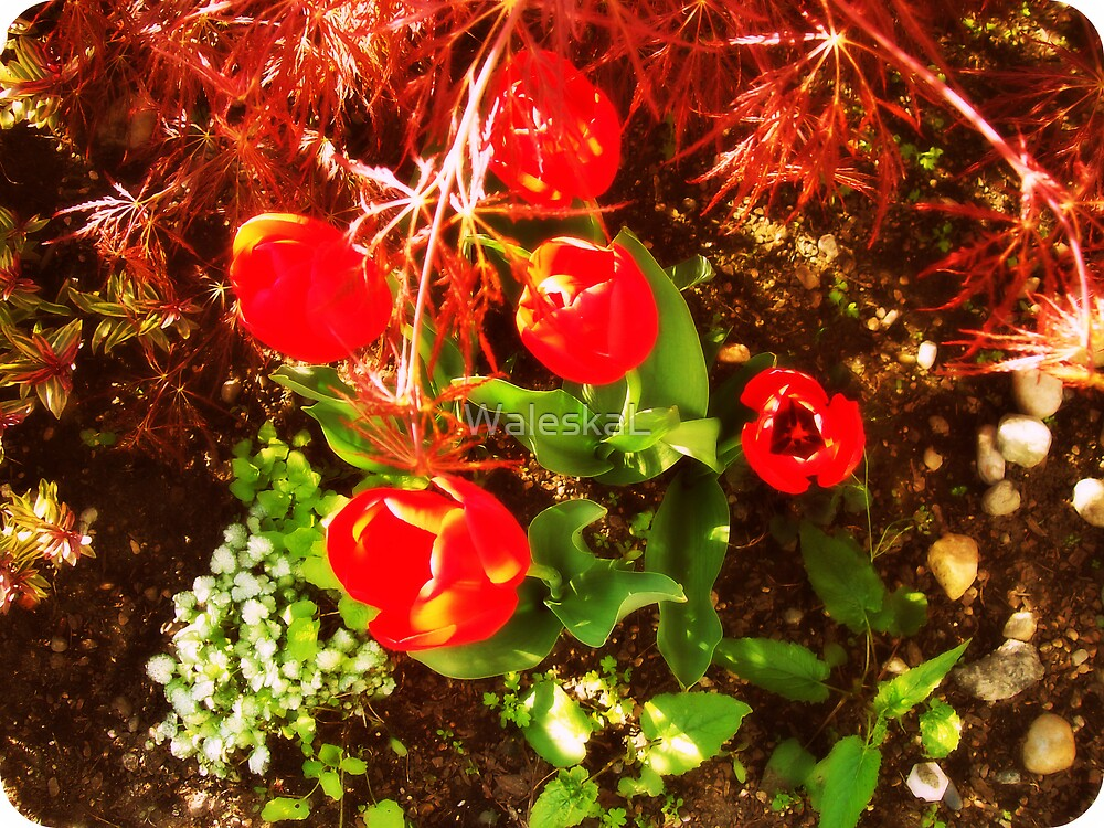 Red Tulips by WaleskaL