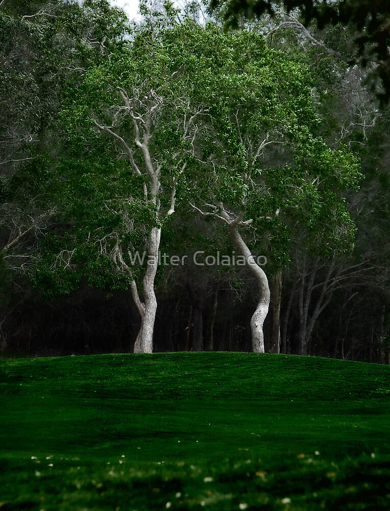 Ghost Trees by Walter Colaiaco