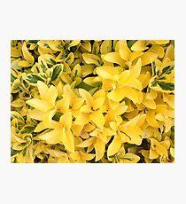 """""""Yellow's Delight"""", Photo Artwork Photographic Print"""