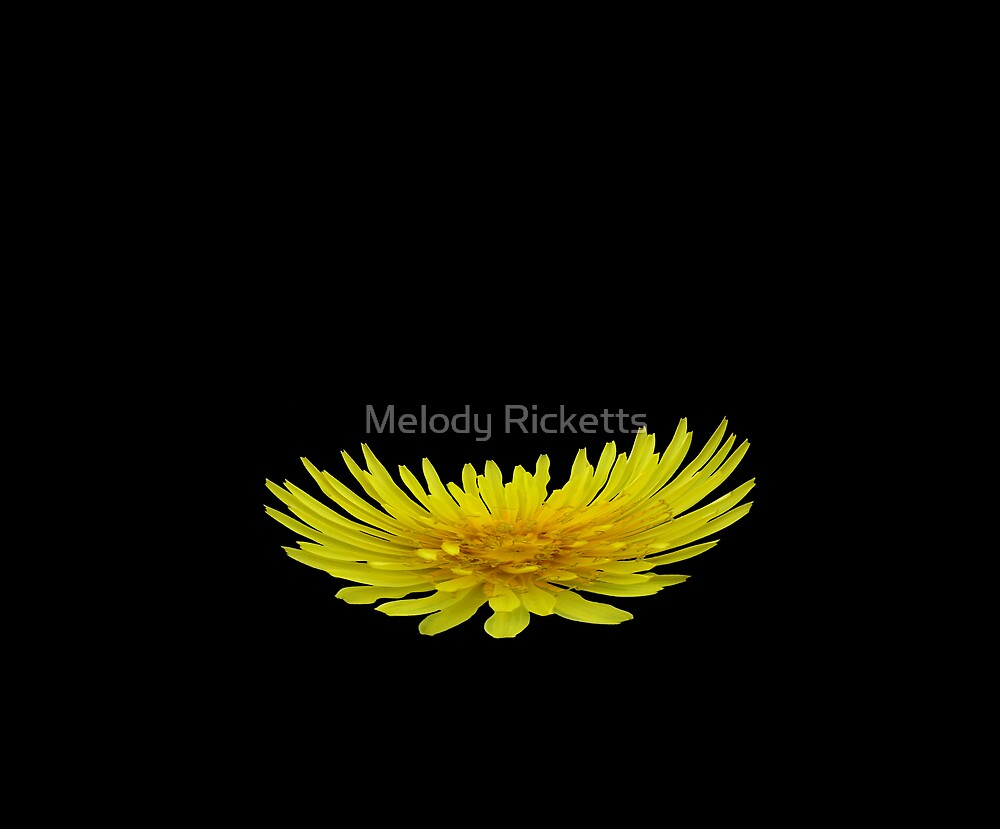 Yellow Dandy by Melody Ricketts