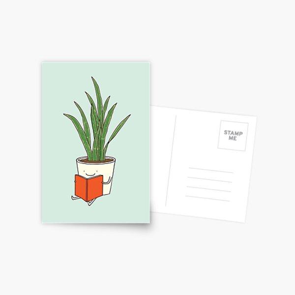 Indoor plant Postcard