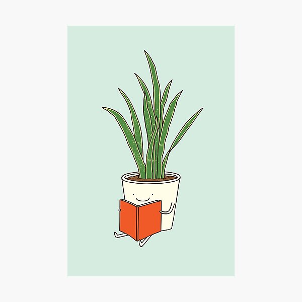 Indoor plant Photographic Print