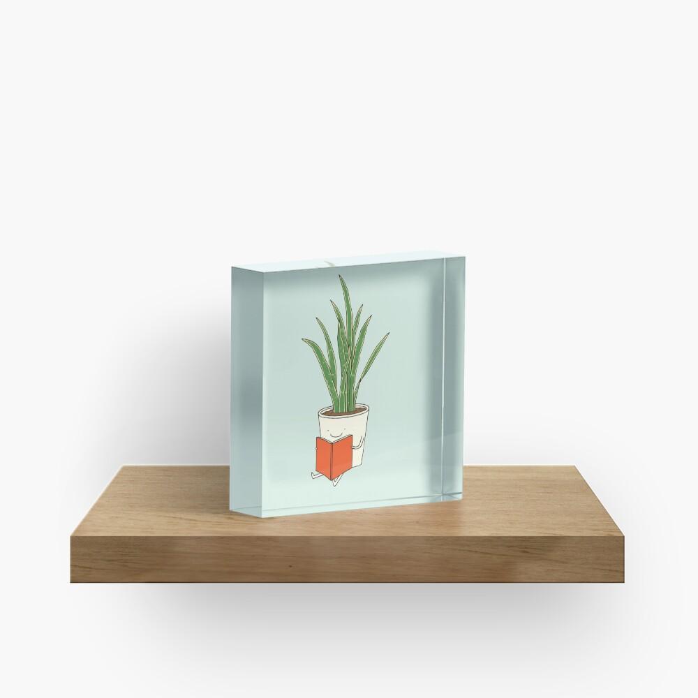 Indoor plant Acrylic Block