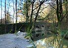 Plymbridge in Spring: Dartmoor UK by DonDavisUK